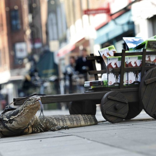 Haha, Giant Lizards Delivering Dragon Age 2 to Retailers