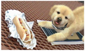 nintendog eating hot dog
