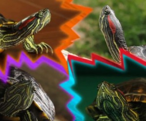 Teenage Average Normal Turtles