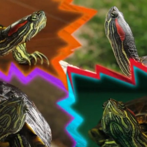What if the Ninja Turtles were average and normal?