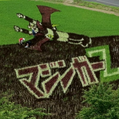 Japanese rice paddy art including Naruto