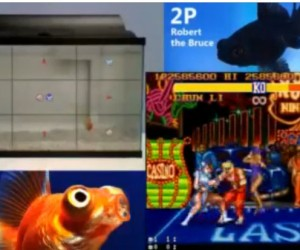 fish street fighter