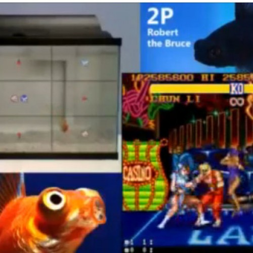 Watch fish play Street Fighter II