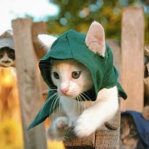 Kittens take over Assassin's Creed Unity
