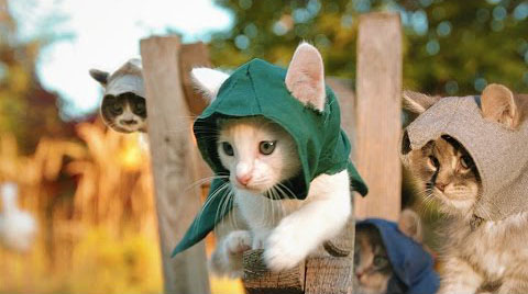 assassin's creed kittens unity