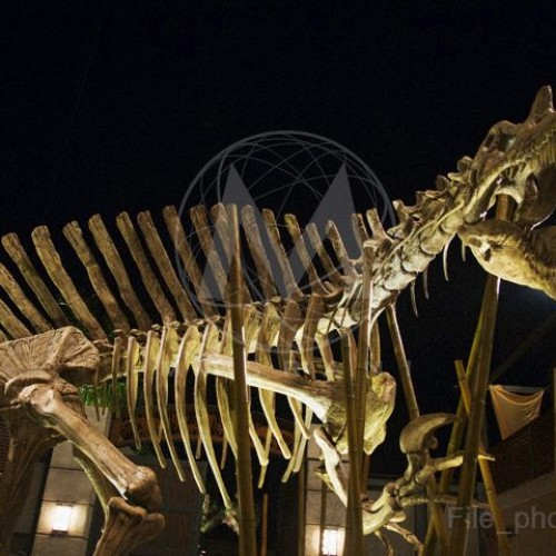 Here's a look at the hybrid dinosaur, the D-rex, from Jurassic World