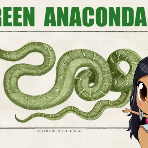 The best way to learn about the 'Anaconda' with Nicki Minaj (parody)