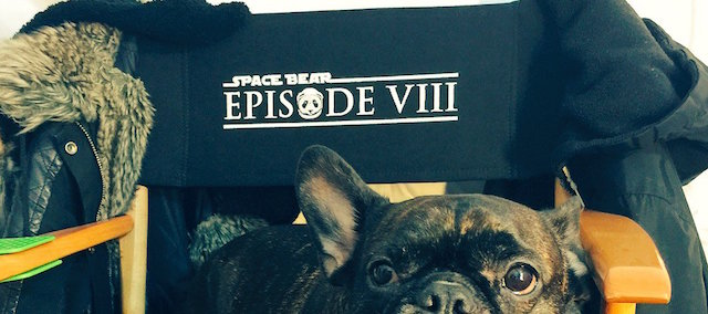 space bear star wars episode viii