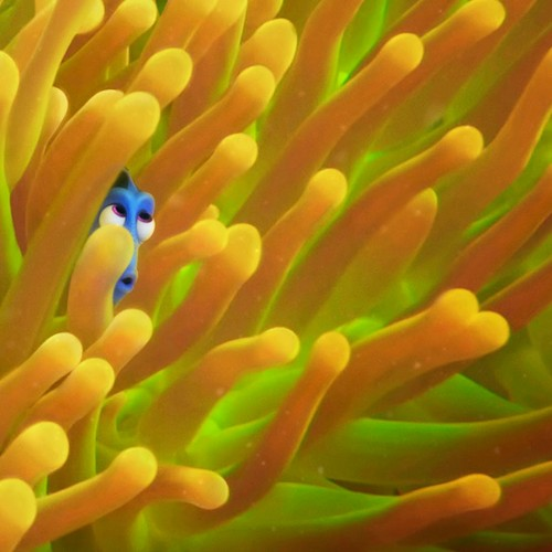 New Pixar's Finding Dory trailer is here