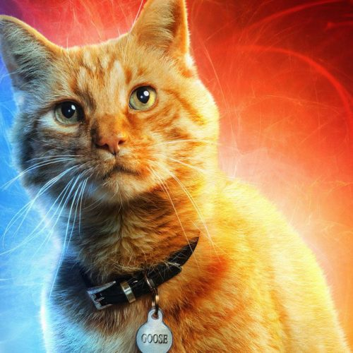 First Captain Marvel screening reactions are raving about Goose the cat