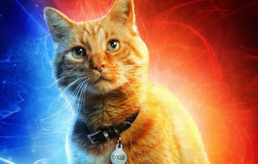 Captain Marvel Goose Cat