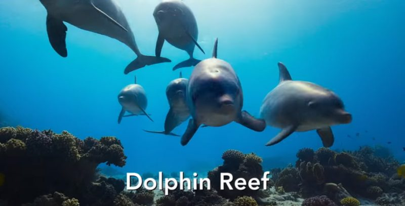 Dolphin Reef Disney+