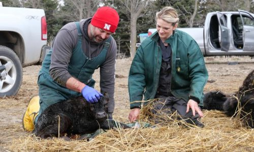Nat Geo's Heartland Docs, DVM shows the life of veterinarians in the Midwest