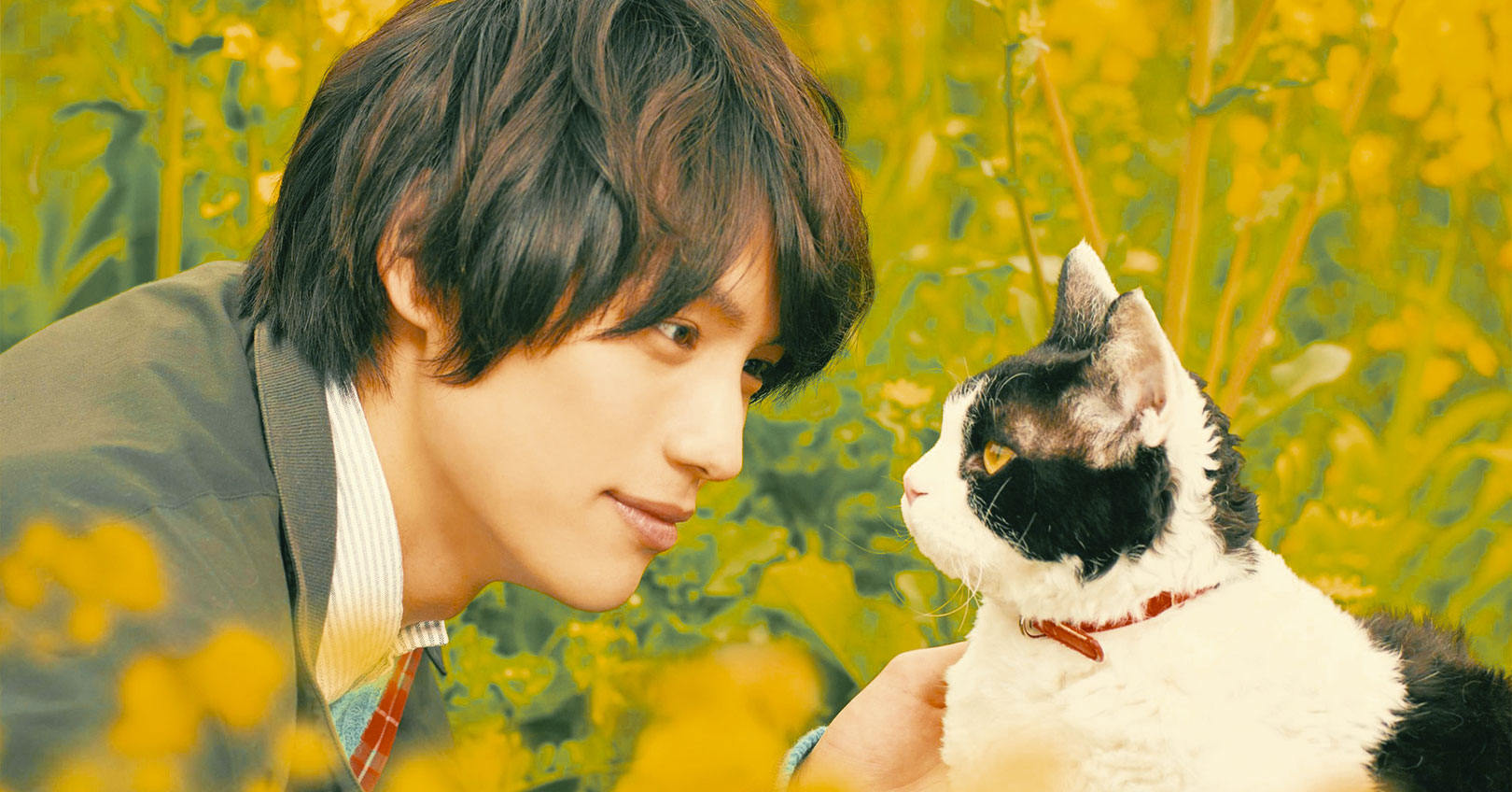The Travelling Cat Chronicles - Sota Fukushi