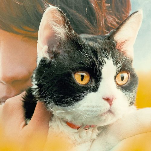 Fantasia Film Festival: The Travelling Cat Chronicles Review